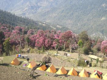 mardi_himal_trek_nepal